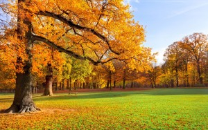 nature-landscape-autumn-park-trees-grass-sunshine-2K-wallpaper